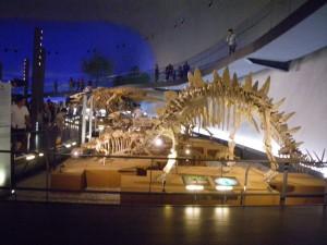 展示骨格模型